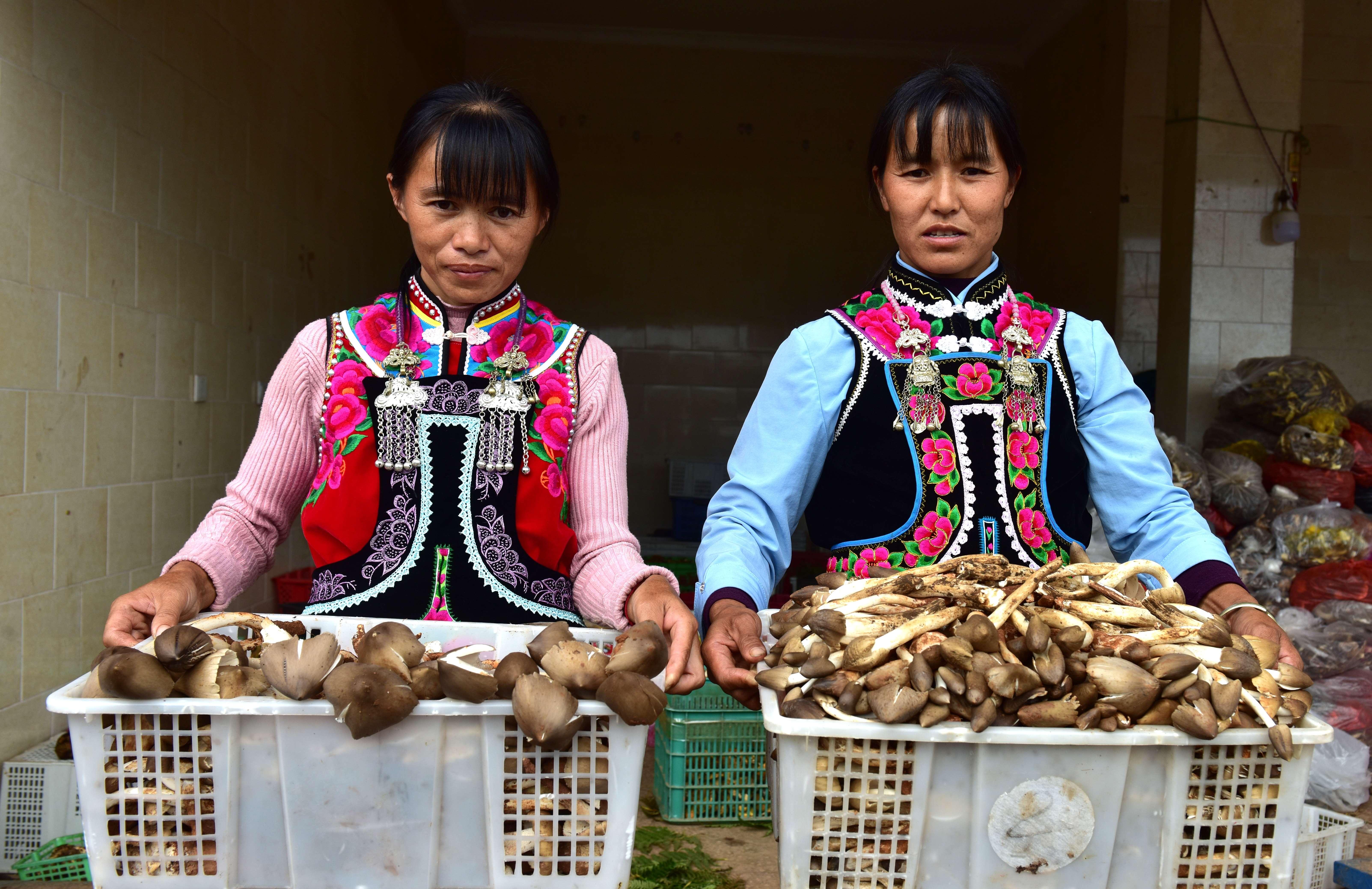南华农户上山采摘新鲜野生菌增加收入